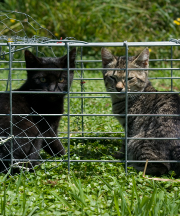 tdn cat stand