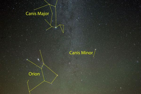 Orion and dogs