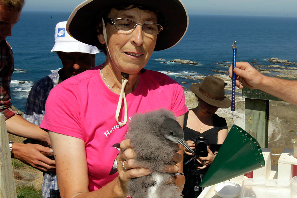 Hutton's shearwaters - Dianne John