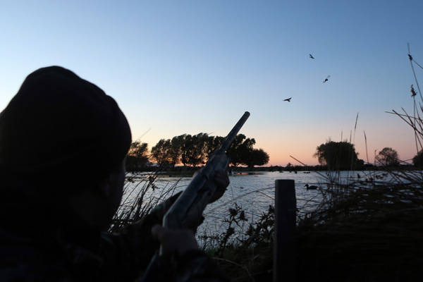 Duck hunting season opens in Canterbury today.