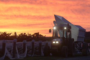 Harvest to break record