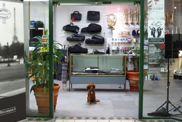 Shop dogs of Wellington