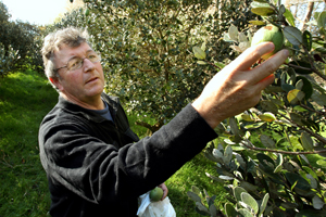 Feijoa growers Mike Stone