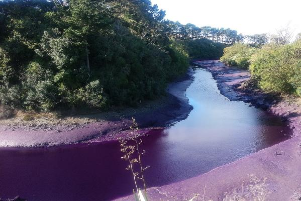 Dye Spill in Manukau Harbour