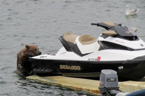 The bears and the jet ski