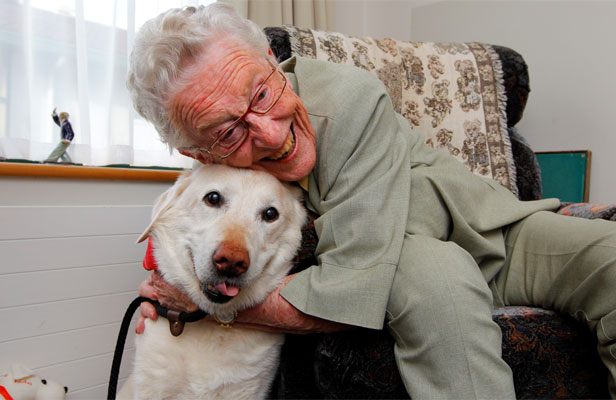 Dog visits cheer up elderly stuff co nz