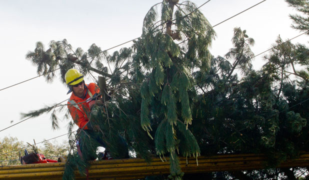 A linesman cuts power lines free from fallen trees in Canterbury after the storm that hit the region on September 10.