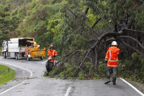 Tree cleared at Shelly Bay
