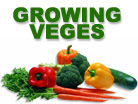 Beginner's guide to growing vegetables