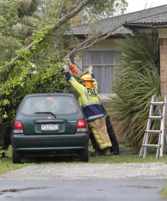 Winds topple tree hamilton