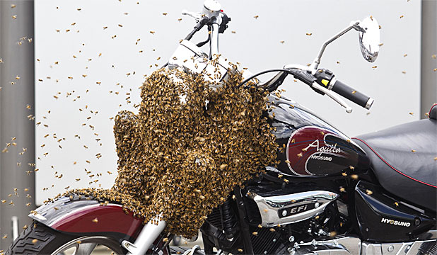 bees on bike