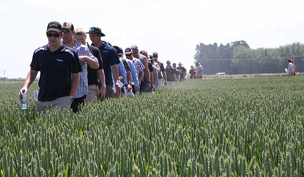 Farmers look at trial plots during a field day run by the Foundation for Arable Research.