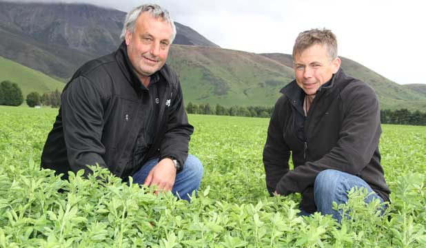 Te Anau farmer Paul Ruddenklau, right, with Organic Futures director Neville Parkinson, is achieving fantastic growth rates from grazing his lambs on lucerne.