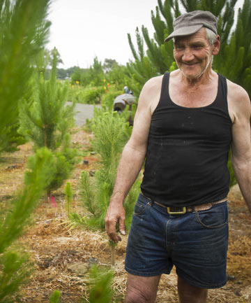 Garry Willcocks, the owner of the Christmas tree farm near Ashhurst in Manawatu.