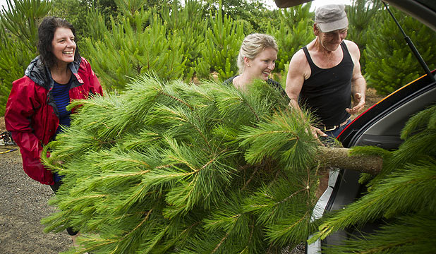 Marion and Annette Bunckenburg load their Christmas tree into their car, with Garry Willcocks, the owner of the Christmas tree farm, lending a hand.