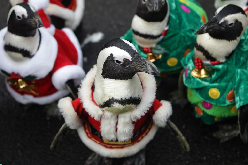 penguin xmas parade