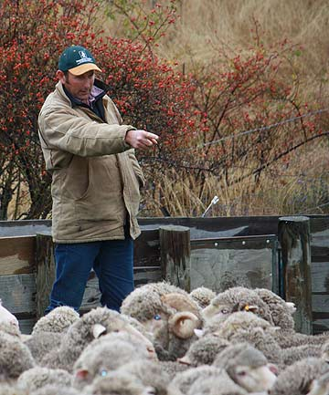 David Anderson has lifted ewe lambing by 15 per cent at Bog Roy Station.