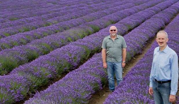 Philip Simms and Owen Dexter of NZLavender