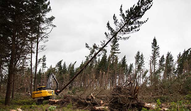 Loggers chewing through a mountain of storm damage