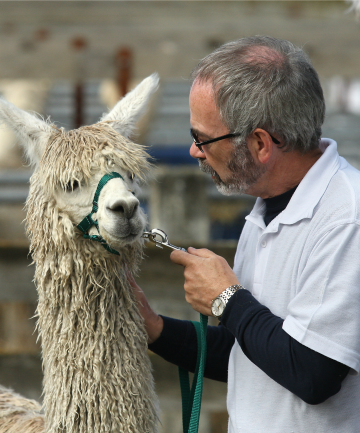 Neil Godfrey, of Temuka, with his alpaca Jarrah