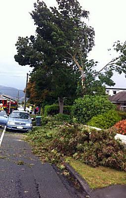 Tree down in Hoon Hay Rd