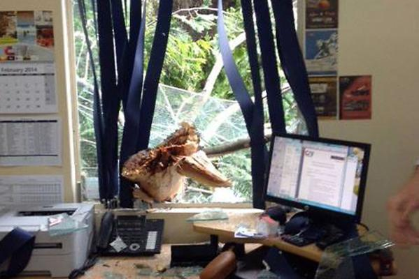 Tree smashes through window