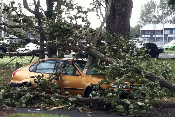 Tree on car in Wooldridge Rd