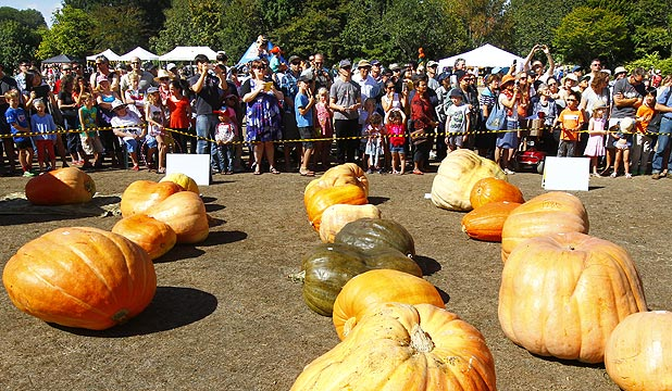 Entries wait for their weigh in at the Great Pumpkin Carnival in Hamilton Gardens.