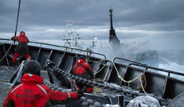 Sea Shepherd anti-whaling