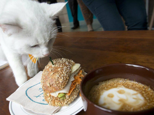 Cat cafe in Manhattan
