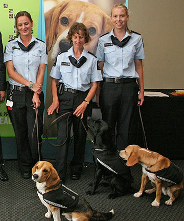 Biosecurity detector dog teams