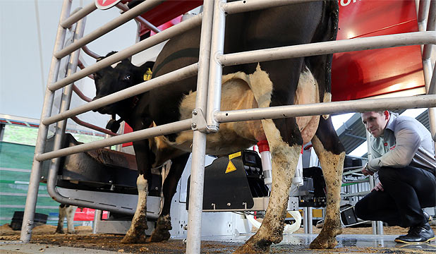 Sam Anderson demonstrates a robotic milker at the Lely stand at the 2014 Natio