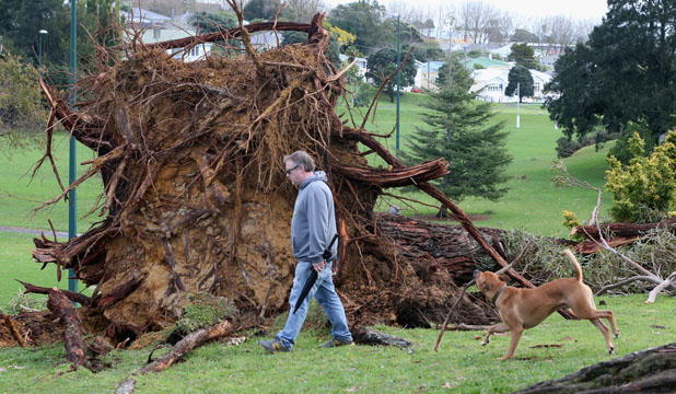 Upturned tree in Auckland, June 11, 2014
