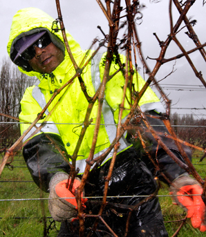Vineyards struggling to find workers