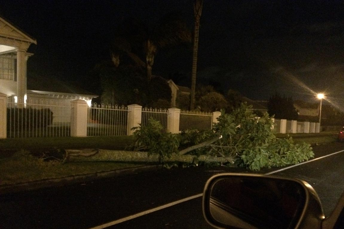 A tree felled by wind in Whitford Rd, Howick, Auckland.