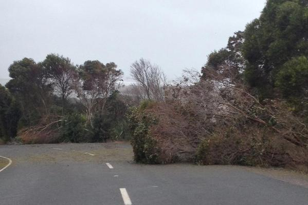 Trees blown down by the wind cover the road in Waipu.