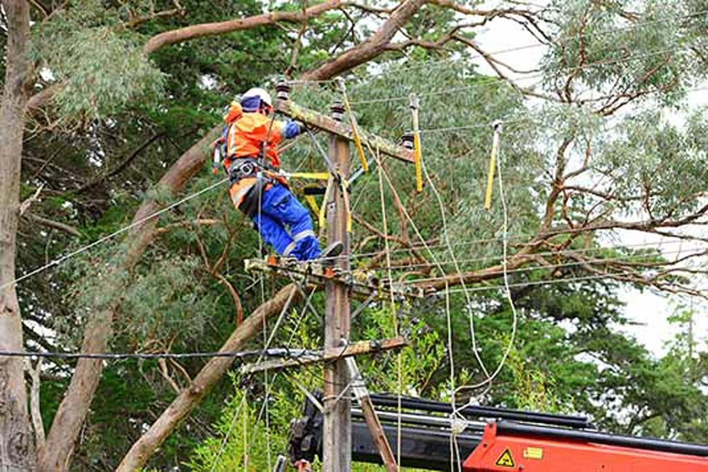 A Vector lines worker repairs powerlines in Muriwai after gales struck Auckland and Northland.