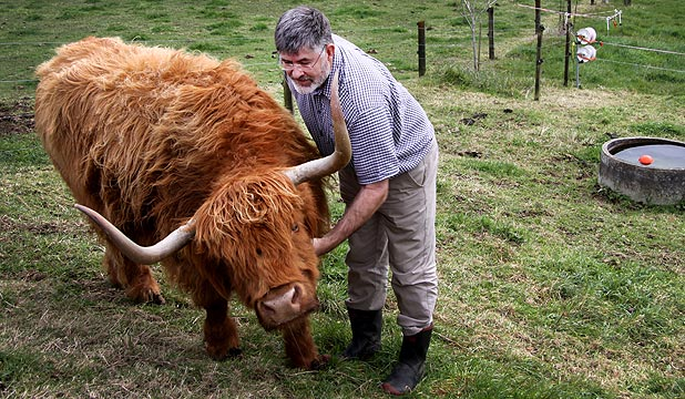 Malcolm Macfarlane gets up close and personal with highland cow Heaven on his Inglewood property.