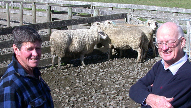 Roger Marshall, right, and stock manager David Kitney with a yarding of kelso rams.