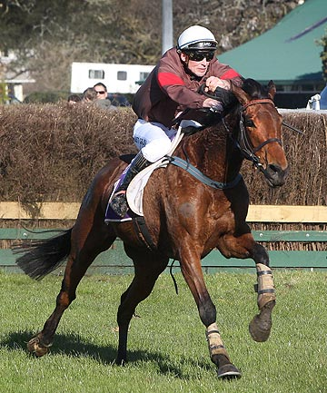PERENNIAL CONTENDER: Ann Browne mare Ima Heroine powers to victory at the 2011 Pakuranga Hunt Cup.