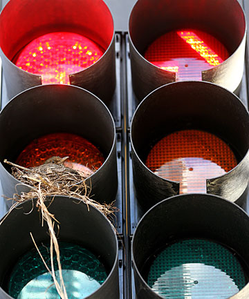 bird traffic lights