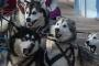 Sled dogs in Christchurch