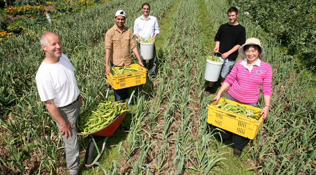 CERTIFIED ORGANIC: The garden which survived restructuring at Unitec. Harvesting broad beans, from left: Lecturer Brendan Hoare with students Inberdir Singh, Dipen Patel, James Vettoretti and Doris Huang.