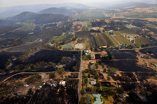 WIPED OUT: Destroyed vineyards in the Yarra Valley after fire ripped through yesterday during Victoria's hottest day on record.