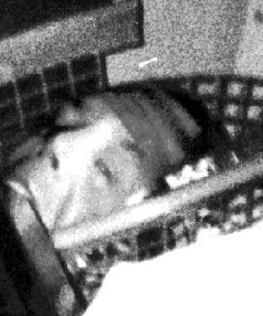 This  photo of the head in the basket was taken in early 1996 in  Halswell