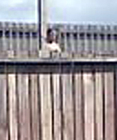 CLOSE UP: A close up of of the figure behind the fence.