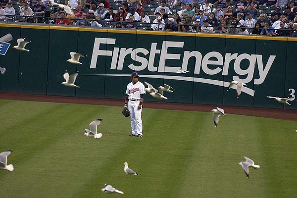 Cleveland Indians right fielder Shin-soo Choo is surrounded by gulls at the fifth inning of their MLB American League baseball game against New York Yankees in Cleveland, Ohio.