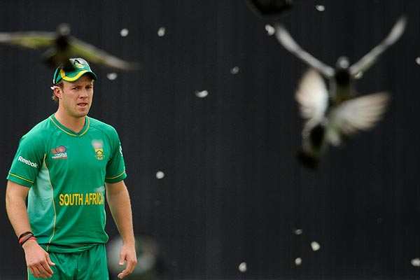 South Africa's AB de Villiers watches as a pigeon flies off losing feathers after being hit by a cricket ball during the ICC World Twenty20 cricket group match against Scotland at The Oval  in London.