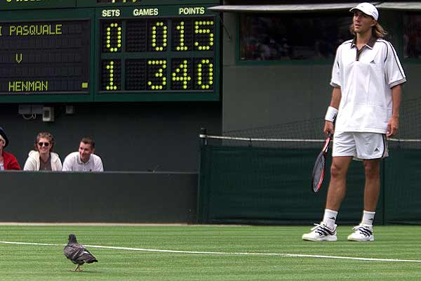 Arnaud di Pasquale of France waits as a pigeon holds up play at Wimbledon's during his match against Britain's Tim Henman.
