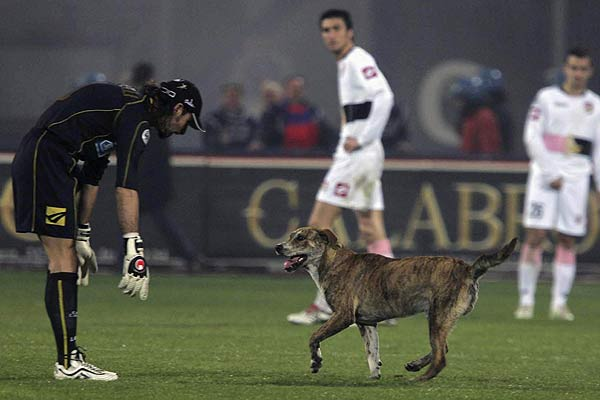 Catania goal keeper Armando Pantanelli (left) looks at a dog on the pitch during the Italian Serie A football match against Palermo in Catania.